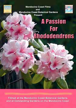 A PASSION FOR RHODODENDRONS